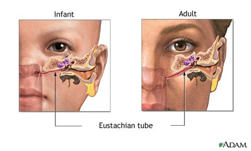 the-eustachian-tube
