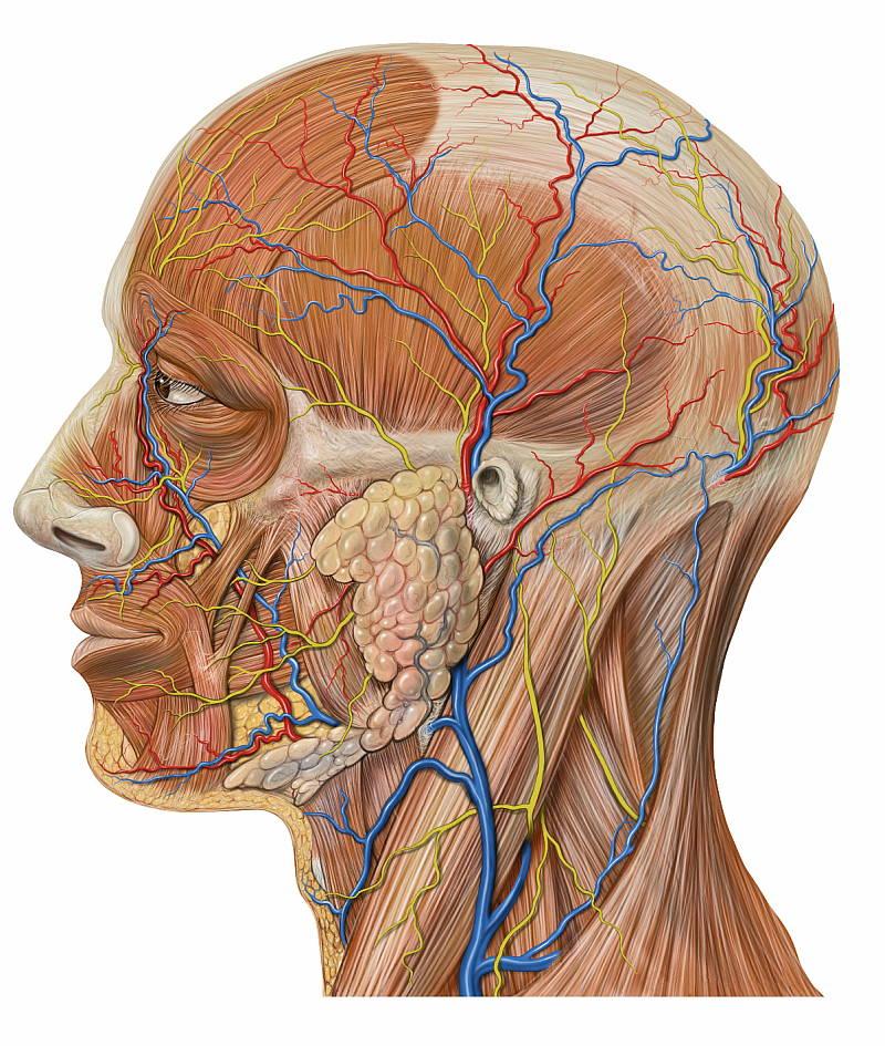 vascular-neck